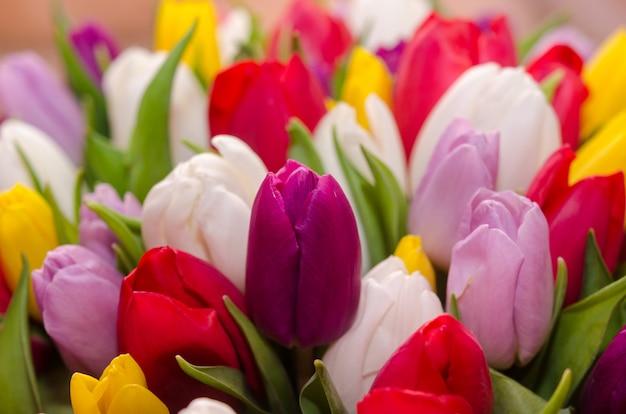 色とりどりのチューリップの大きな花束。明るく日当たりの良い写真