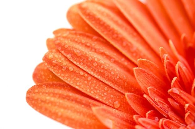 Крупный план цветка