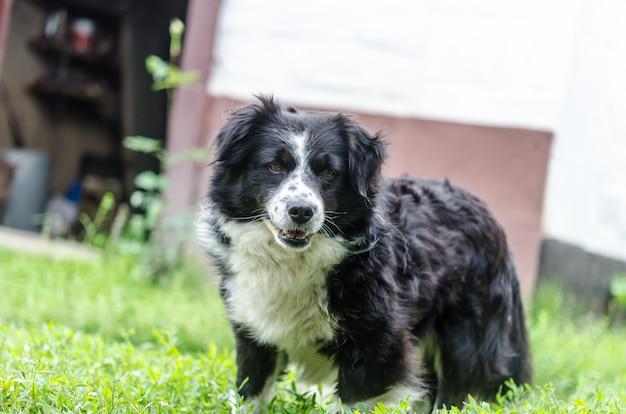 黒い犬は緑の草の家の近くにいる。