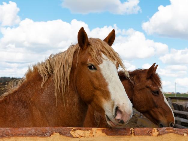 自然の中の馬。茶色の馬、馬の肖像