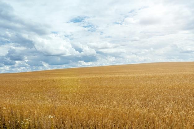 小麦と夏の日に雲と青い空を背景にスタックのフィールド