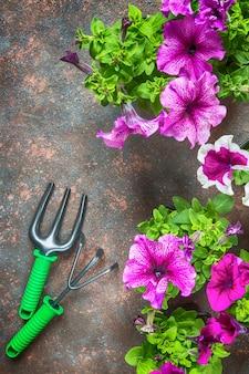 花ペチュニアとガーデンツール、暗い背景上のフレーム