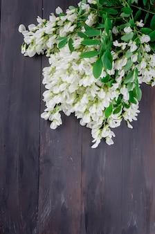 アカシアの花、暗い背景の木