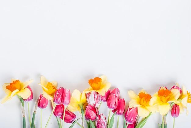 黄色の水仙と白い背景の上の行にピンクのチューリップ