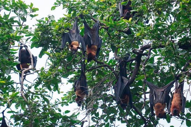 Летучая мышь висит на дереве