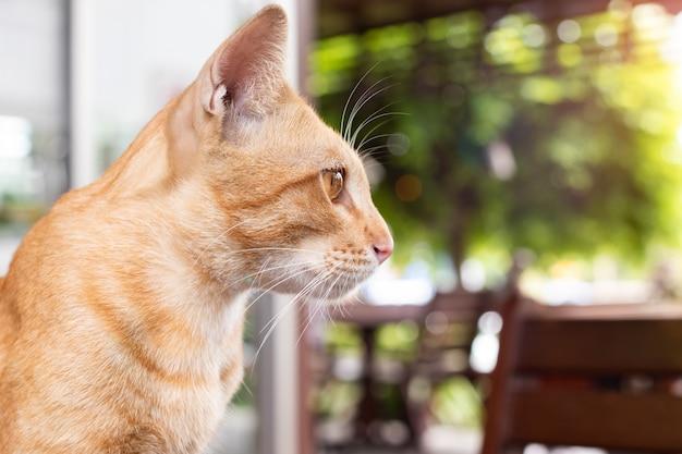 Кот смотрит снаружи