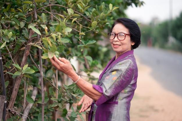 アジアの老婦人はレモンの木を探していると田舎で竹かごを持っています。