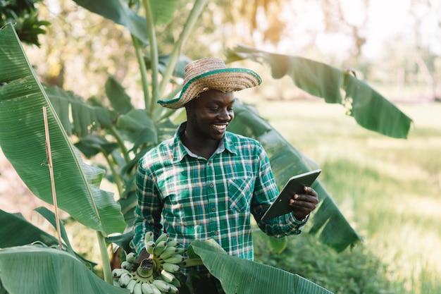 Африканский фермер держа банан и смотря таблетку на органической ферме