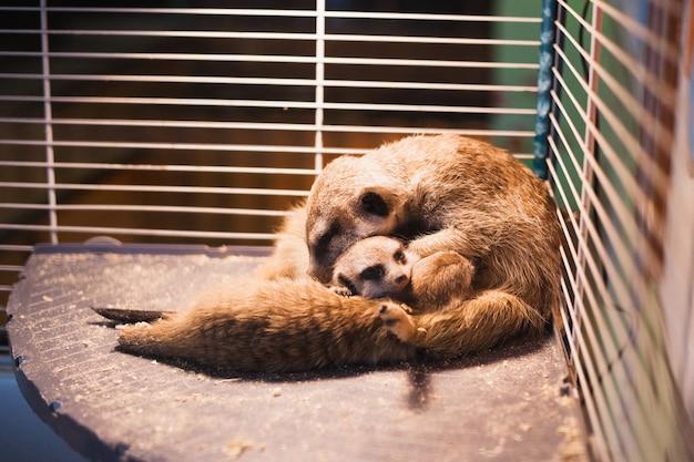 ペッティング動物園でミーアキャット