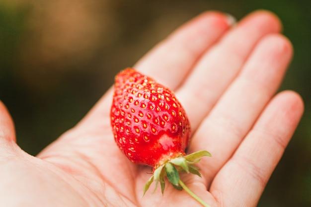 イチゴ、ベリーと夏、おいしいジューシーで香りのよいイチゴ、食べ物、子供とビタミン、飲み物、スムージー、手、女性のプレート