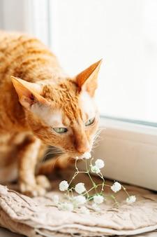 猫の香りの花
