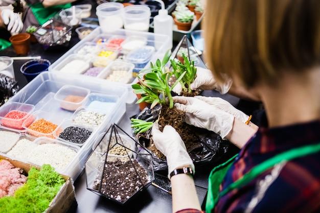 Мастер-класс по посадке кактусов и суккулентов в виде стекла