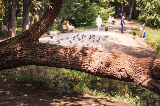 公園を歩き、夏を歩き、公園の家族、緑と木の幹を歩きます