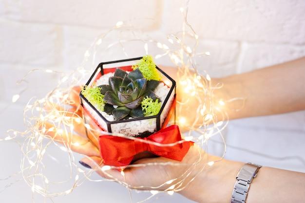 Девушка держит в руках флорарионов, стеклянных фигур с суккулентами, камнями и песком, украшенными рождественскими ленточками. новогодние подарки для дома и офиса.