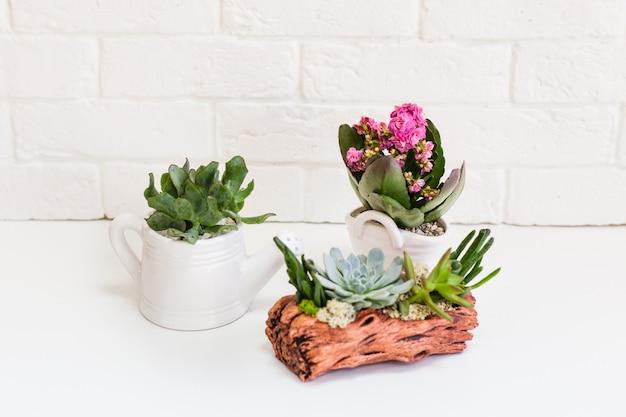 植物とセラミックフォーム。多肉植物、サボテン、家庭用装飾植物