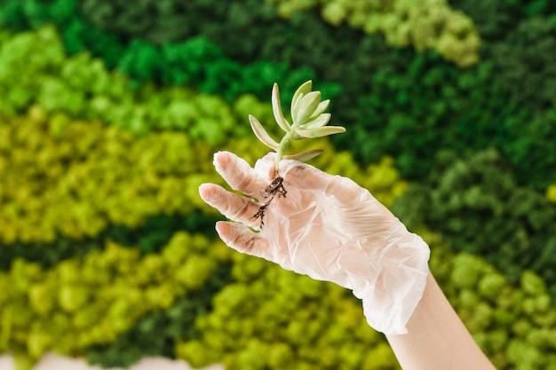 植物や室内装飾用のガラス型、砂、土、多肉植物、サボテン、植物、少女植物