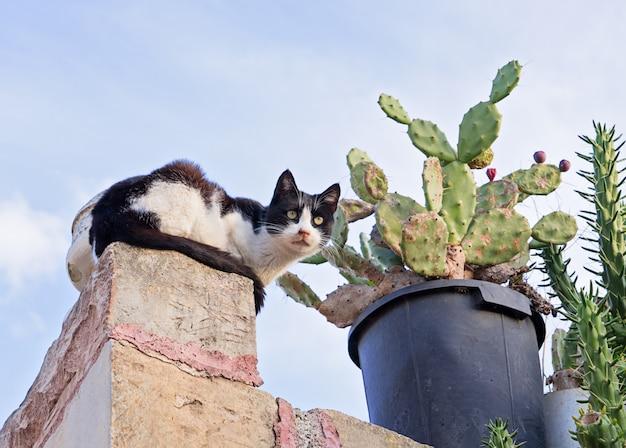 フェンスとサボテンの怖い猫