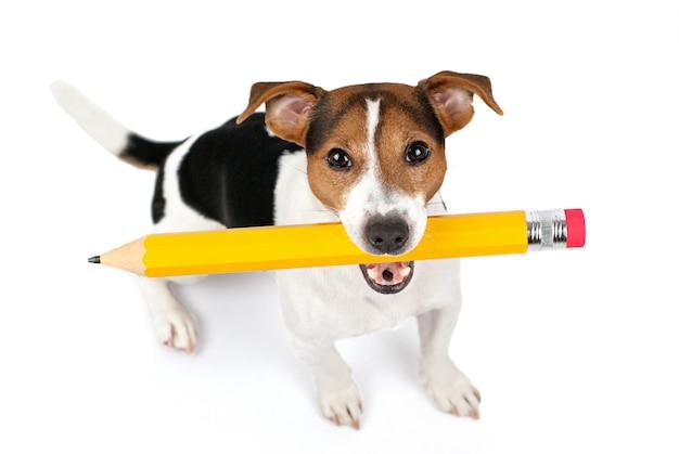 Вид сверху сидит собака и держит большой желтый карандаш