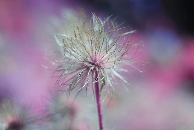 カラフルな背景に対してシュールな花と抽象的な花柄。