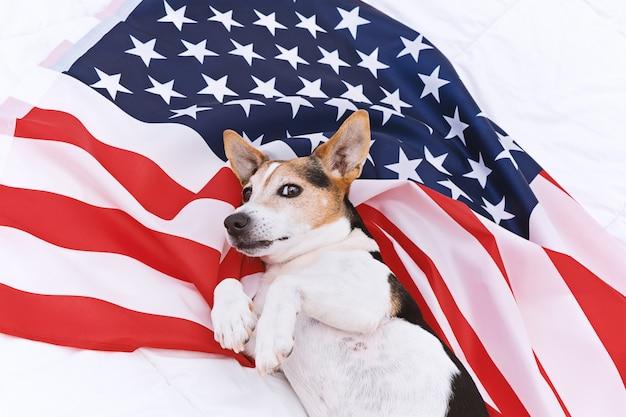 かわいい犬はアメリカの国旗の上にありカメラを見ています。アメリカ国旗の日のお祝い