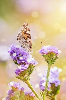 美しい蝶のクローズアップまたは蜜を食べる閉じた翼を持つ