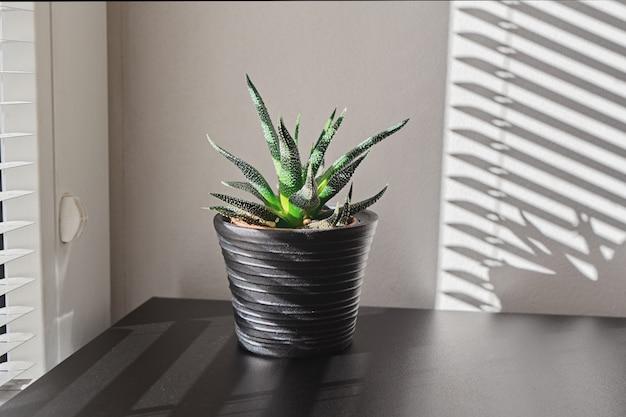 黒いポットの屋内植物