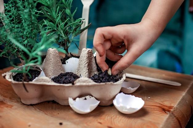 Милая школьница выращивает кухонные травы