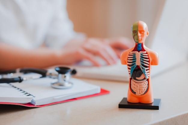 ぼやけている医者と人間の臓器の解剖学的モデル