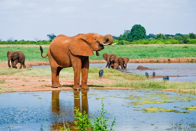 アフリカの巨大な象