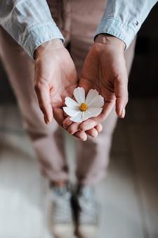 Цветок белой ромашки в руках