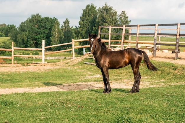 屋外のフェンスで囲まれたエリアの馬。森、生態、自然の木製のフェンスの近く