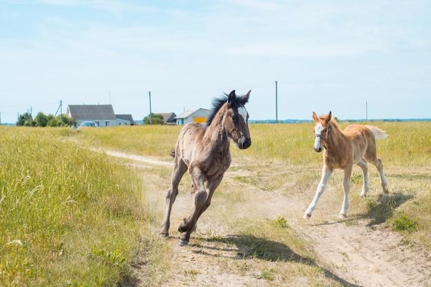 馬と美しい緑の背景を持つライ麦畑で彼女の子馬の肖像画。