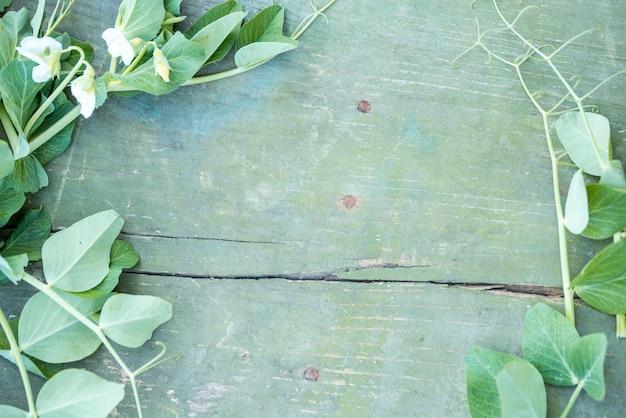 青いビンテージ背景にエンドウ豆の花。ひびの入った塗料植物のローチは木の丸太を飛ぶ