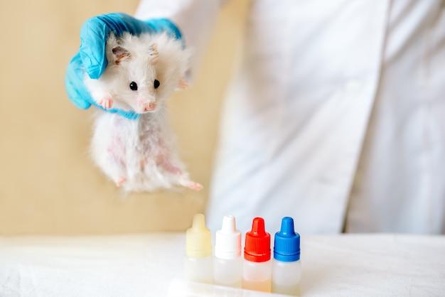 獣医師は小さなハムスターの検査を行っています。