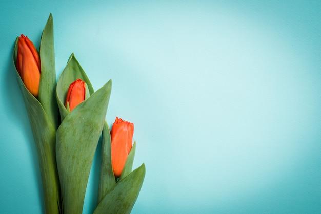 青い木製の背景に赤いチューリップ