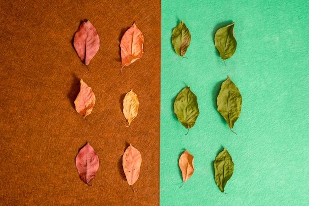 乾燥した明るい秋の組成は、茶色と緑の背景を感じた。美しい秋のカード。トップビュー、フラットレイアウト。
