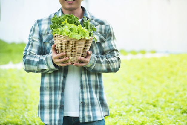 若いアジア人の手の肖像写真は、温室で彼の水耕栽培農場から新鮮な野菜サラダを収穫するグリーンレタスのバスケットを保持します。