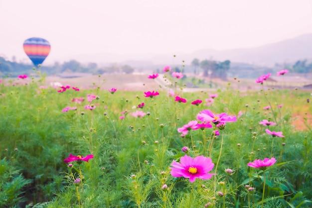 熱気球飛行と美しいピンクのコスモスの花