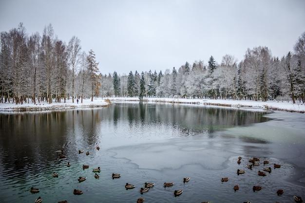 Зимний парк. снежный парк. картинка зимнего парка. зимний пейзаж зимняя природа