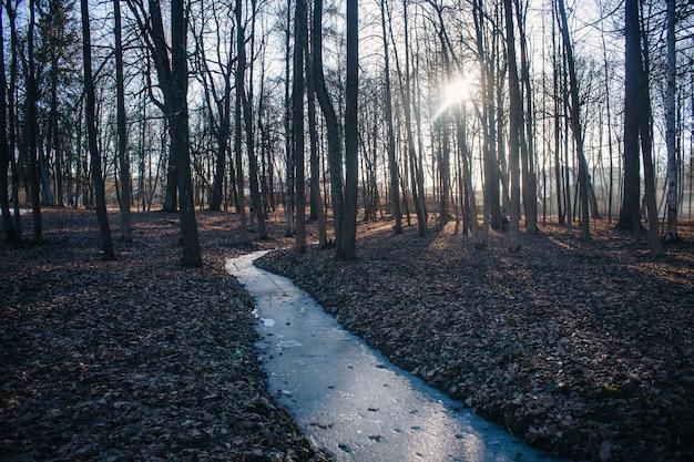 雪と緑のない春の公園の風景。昨年の葉と木々は裸