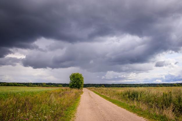 夏の畑の風景。ロシアの広場。嵐の前の。暗い雨の空。