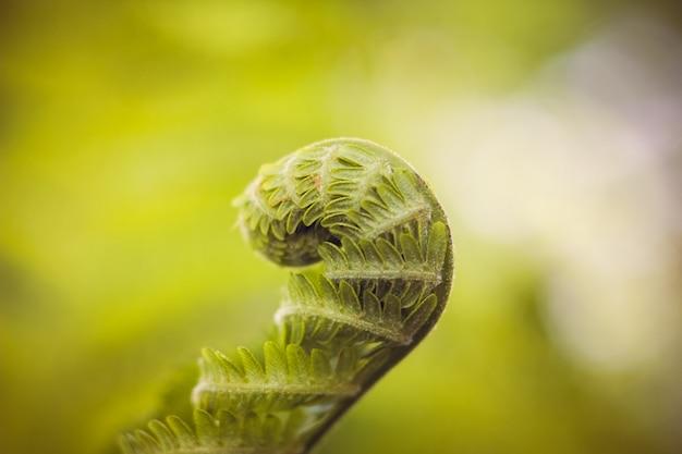 Лист папоротника лист зеленого растения