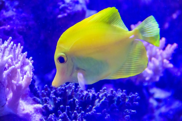 動物園の水槽で魚が泳ぐ