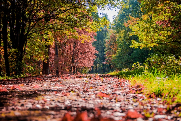 秋の公園の風景。