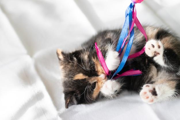 猫はおもちゃで遊んでいます。子猫。子猫。動物のおもちゃ。