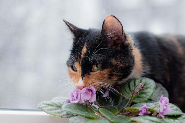 猫と鍋に家の花