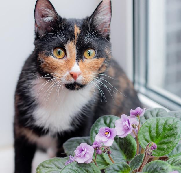 鍋に猫と家の花。動物と家の花。猫のためのホーミー花の害。トリコロール猫