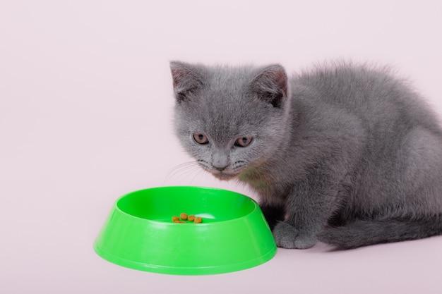 猫は丼から食べる。ペット。グリーンボウル。灰色のイギリスの猫。動物の栄養。