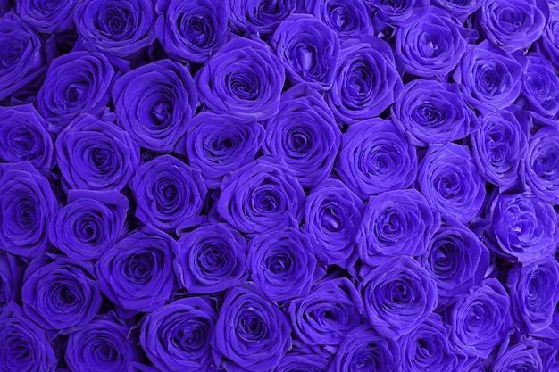 青い花のバラの背景。青いバラの背景