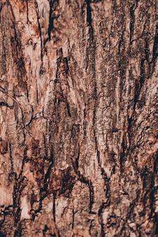 古い木の木のテクスチャ背景パターン